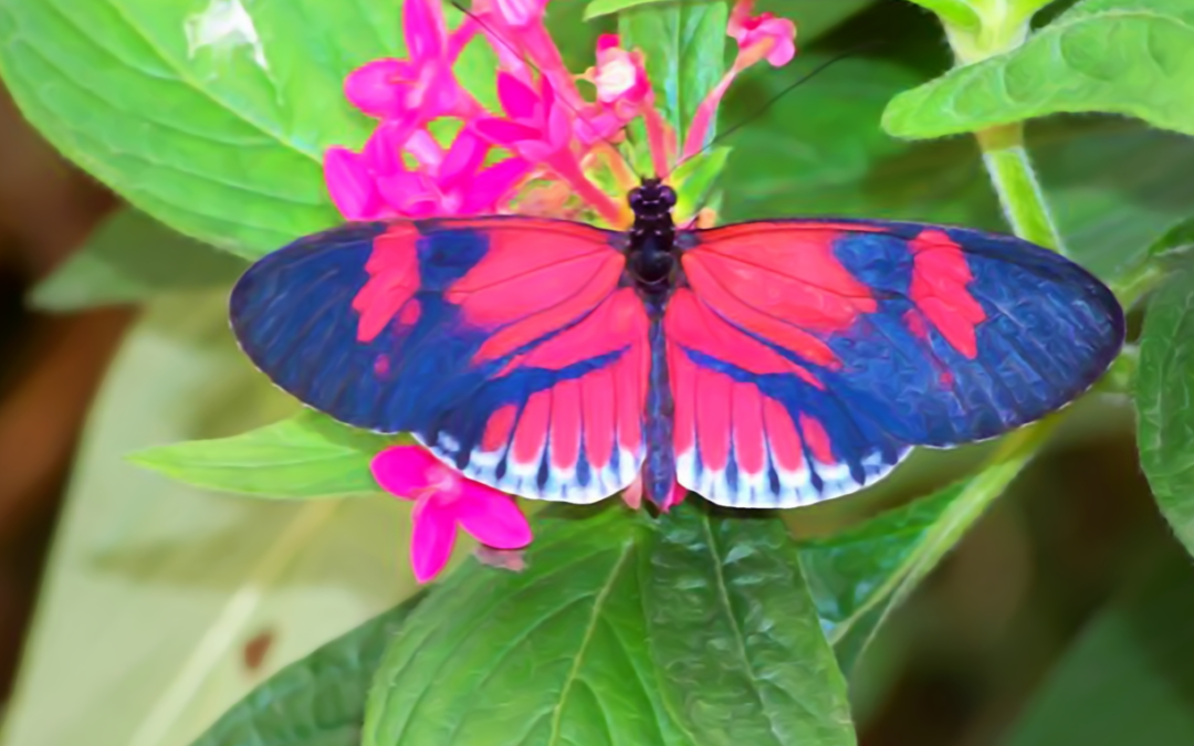 HELICONIUS AND THE PASSION FLOWER